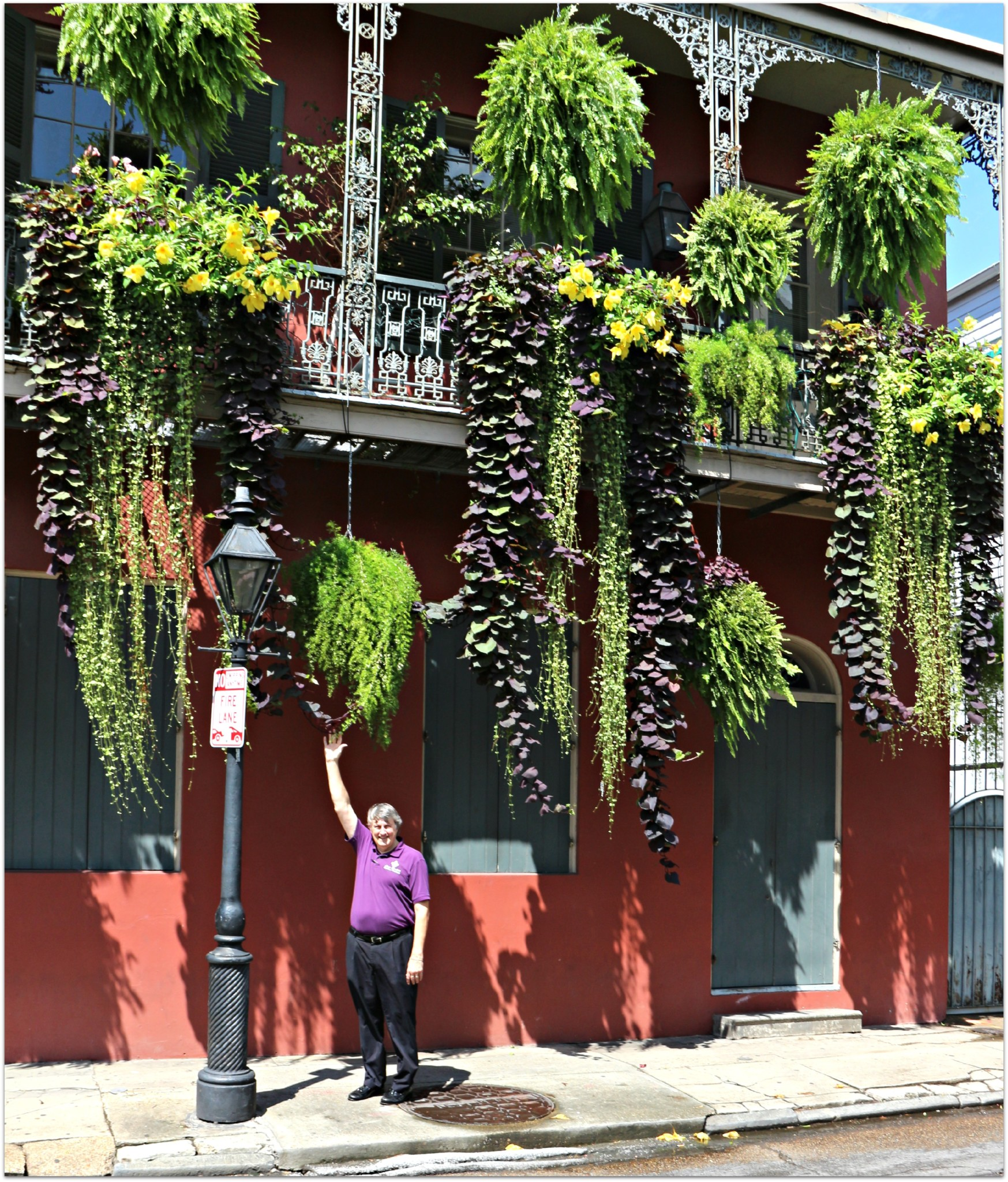 Hanging Plants in French Quarter
